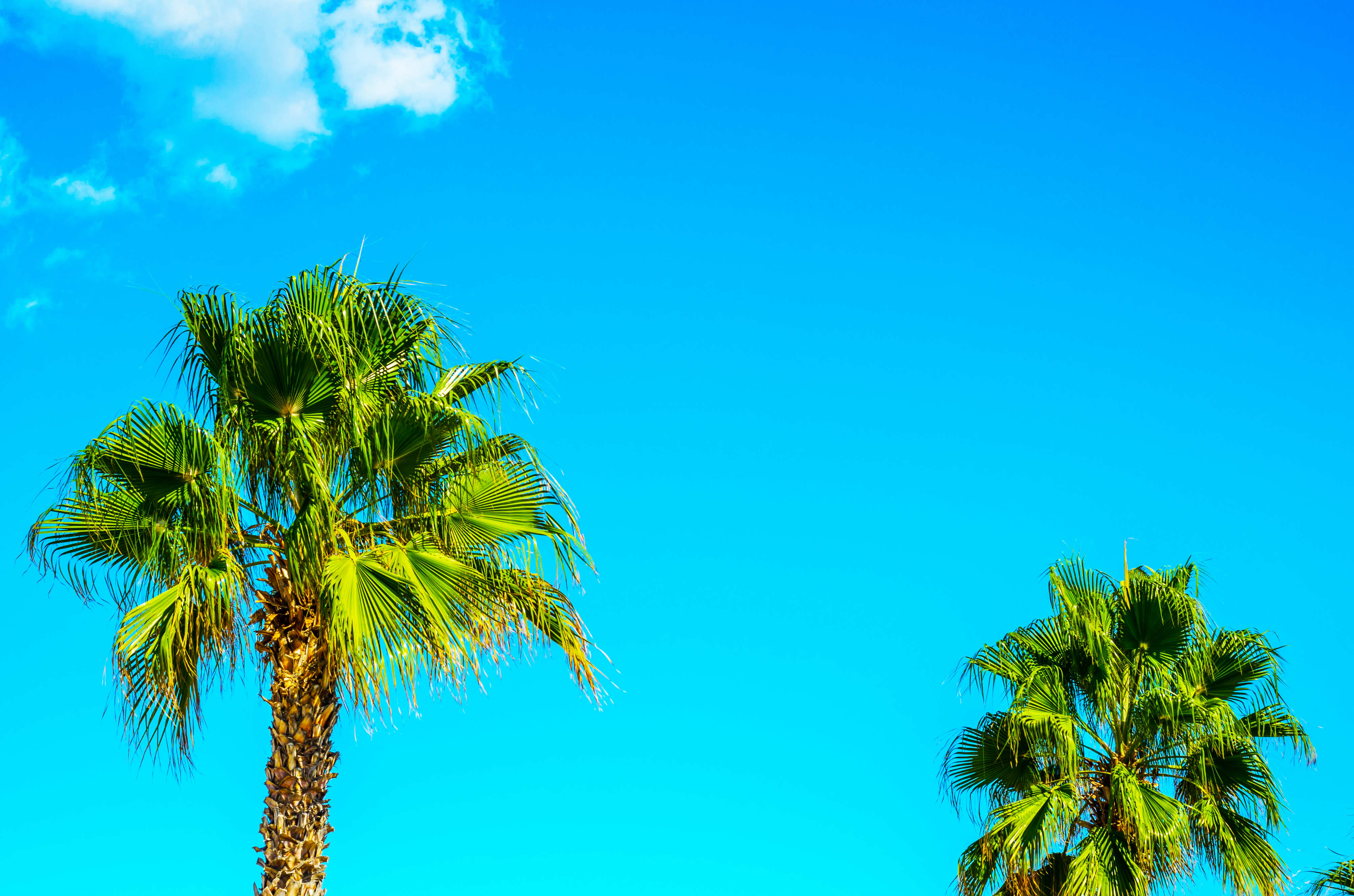 Palm trees with a clear sky
